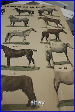 EMILE DEYROLLE Les Animaux De La Ferme Les Chevaux 32.5 x 23.75 Lithograph